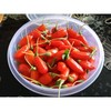 Chinese traditional weight loss goji berry