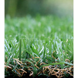 kindergarten grass