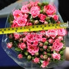 A grade sprayed head pink rose flower shipping out from Kunming China