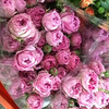 Professional wholesale sprayed head purple cut fresh rose flower
