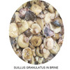 Suillus granulatus in brine