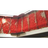 Dried goji berry size 280 new crop