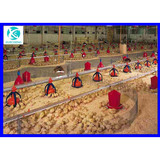 cheap prefab steel structure chicken poultry house