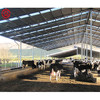 Fast assembly prefab steel structure dairy cow shed