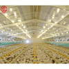Automatic prefab steel structure broiler chicken house