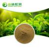 High purity tea polyphenols powder organic green tea extract