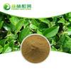Organic green tea extract catechins egcg natural green tea powder