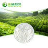 Private Label Green Tea Extract L-Theanine Green Tea Leaf Powder