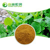 Oragnic Mint Powder Peppermint Flavor Extract Mint Leaves Extract