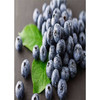 Bilberry extract,PLANT EXTRACT,Solvent Extraction