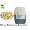 Rhizoma bolbostemmae concentrate liquid