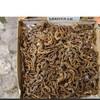 Air Dried Seahorse,Wild Dried Seahorse,Hippocampus