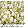 HIGH QUALITY DRIED JASMINE FLOWERS TEA  VDELTA