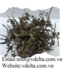 HIGH QUALITY  DRIED PAPAYA LEAVES  VDELTA