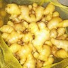 Good Quality Chinese New Crop Fresh Ginger
