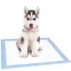 New Product Training Disposable Pet Pad