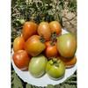 vegetable seed /oval tomato seed