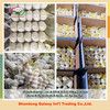 5pcs Pure white garlic